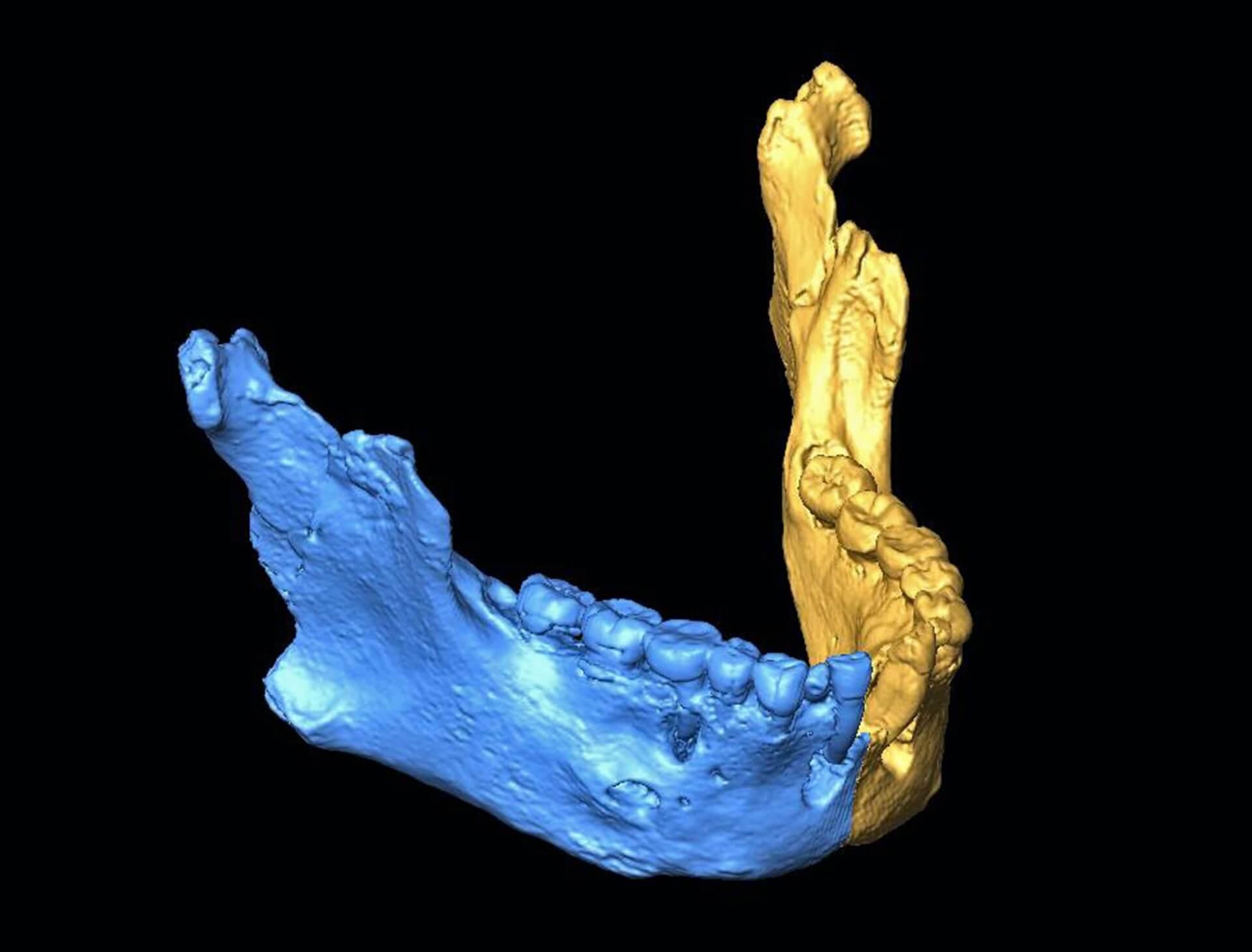 Los neandertales de el sidrón palarq
